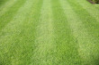 Fresh cut grass